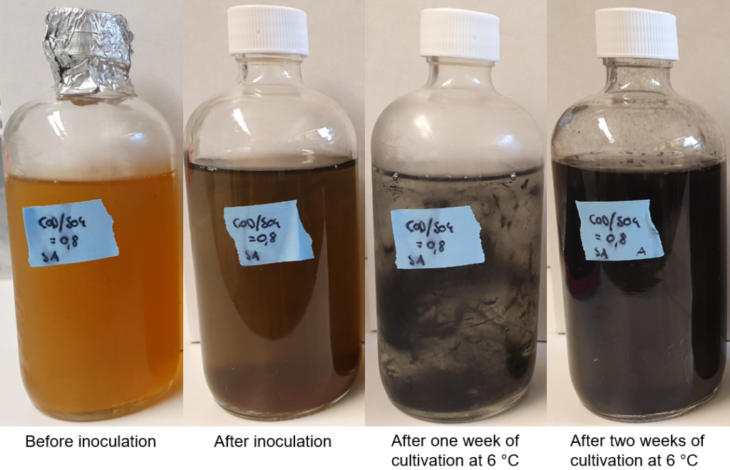 sulphate reduction experiment over 2 weeks